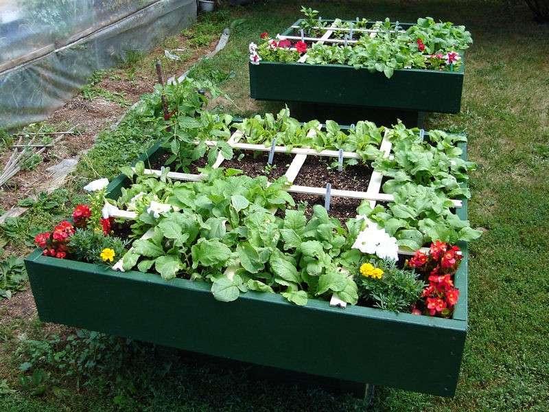 Se puede cultivar una huerta a la sombra el horticultor for Square foot garden designs