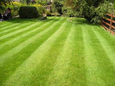 Natural Lawn Care Mn