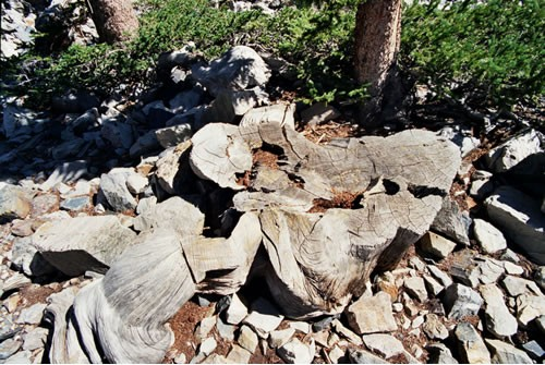 Stump of Prometheus