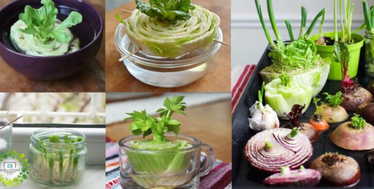 , ¿Alguna vez has intentado Replantar restos de vegetales de la cocina?