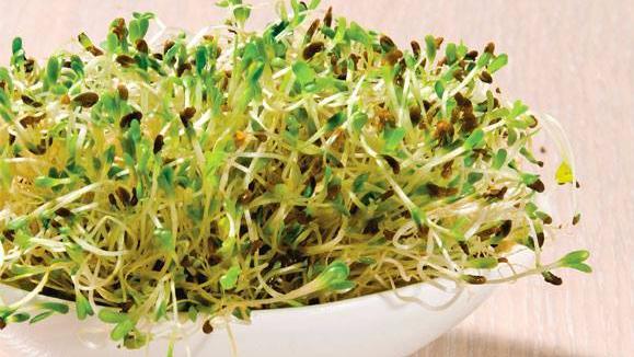 , Brotes de alfalfa