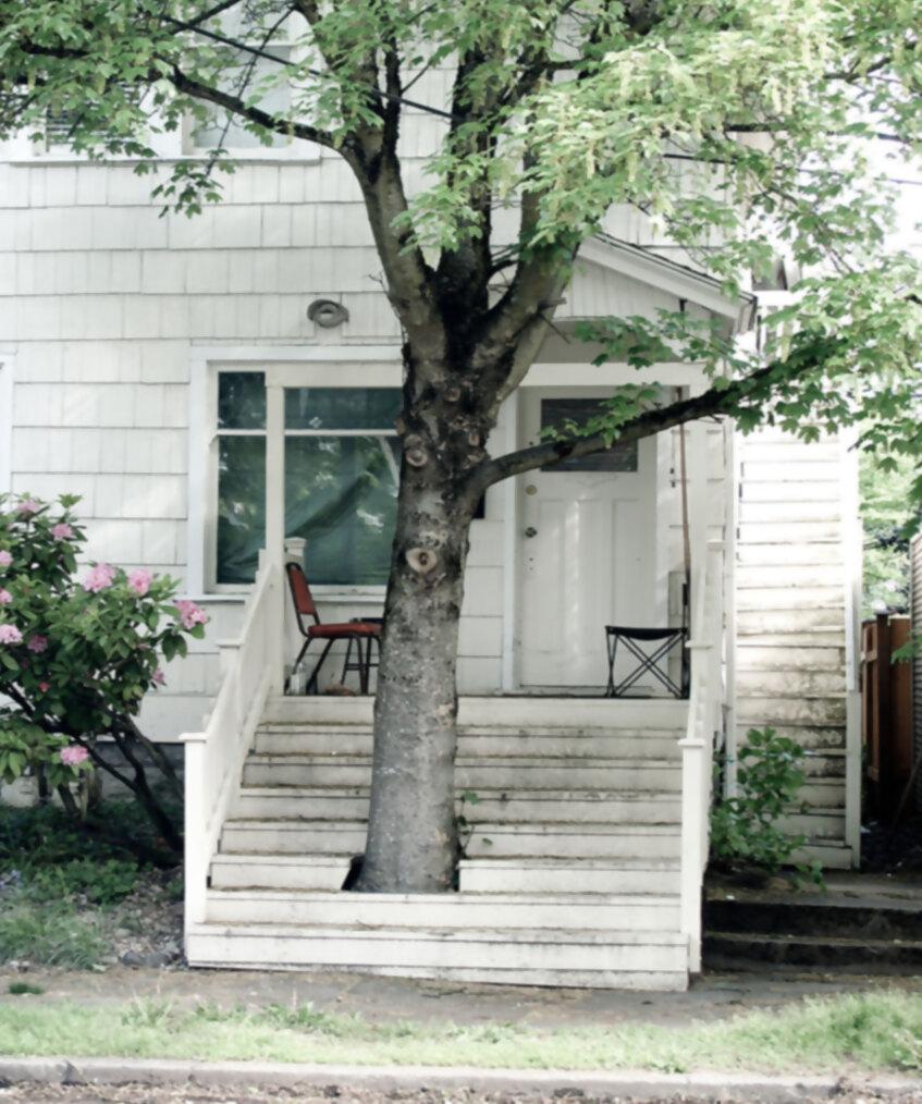 7.Escaleras que abrazan al árbol