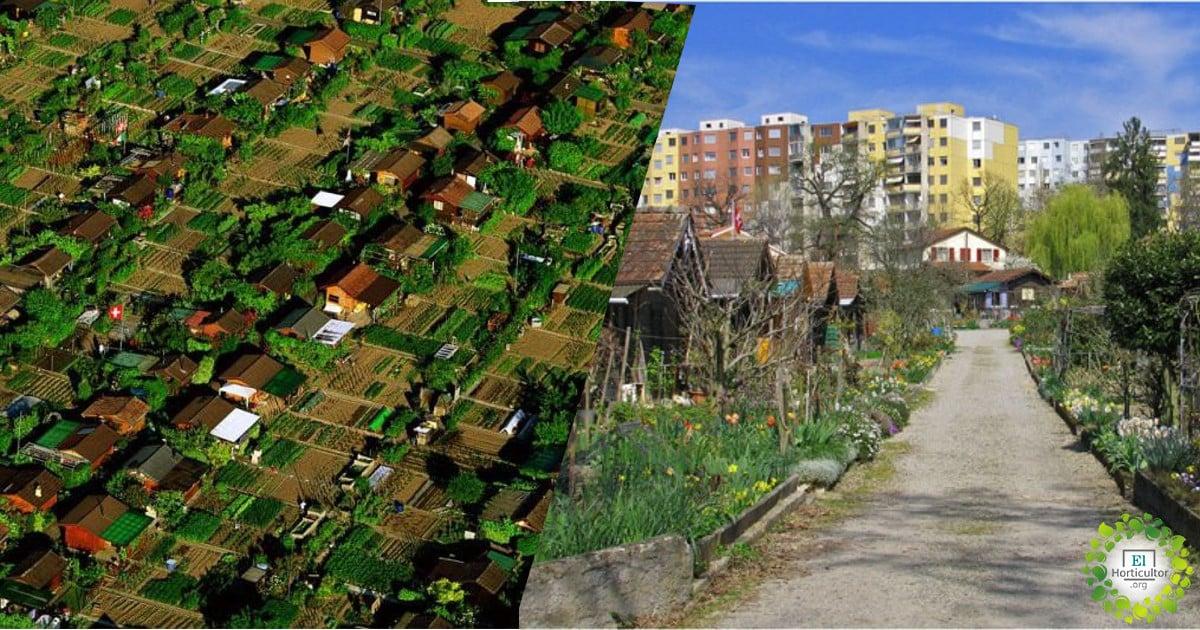 , La ciudad suiza donde los habitantes plantan e intercambian su propia comida