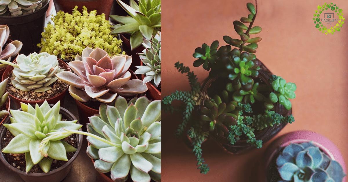 , 10 Plantas Suculentas fáciles de cultivar