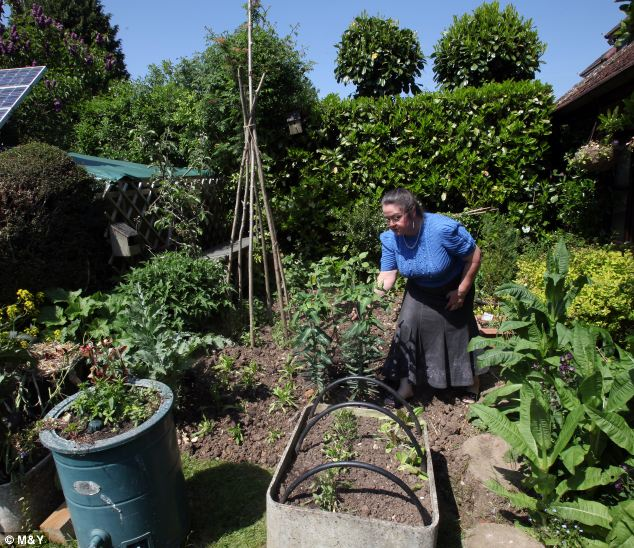 They grow a huge variety of vegetables, harvest multiple fruits from their home orchard and keep chickens as well as bees