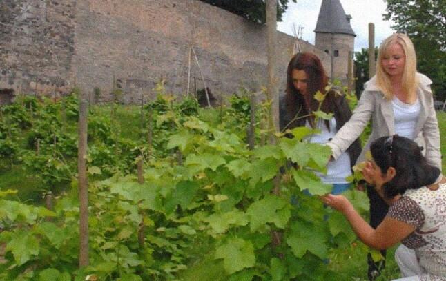 http://www.newslichter.de/wp-content/uploads/2012/06/andernach.jpg