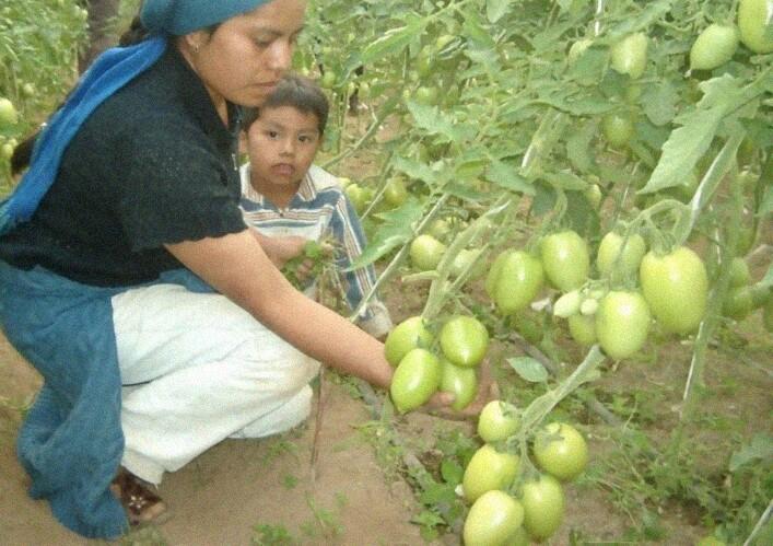 Una alumna le enseña agricultura sustentable a madres solteras
