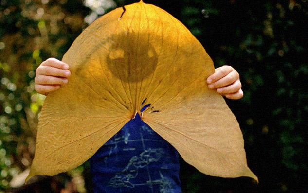 , Increibles fotos que se revelan en hojas de plantas utilizando sus pigmentos naturales