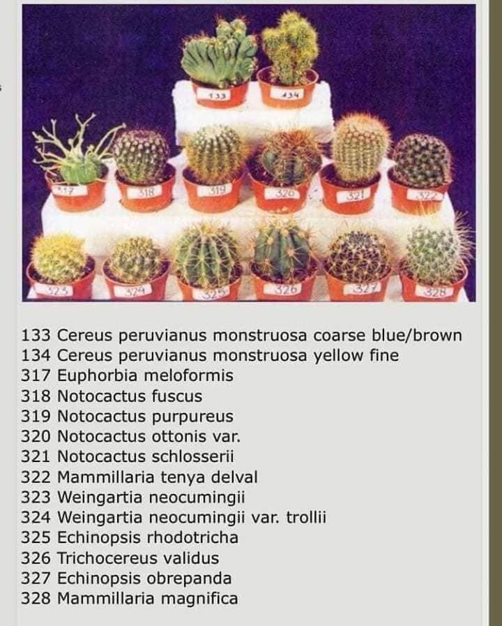 , 10 Especies de cactus y plantas suculentas fáciles de mantener y cultivar