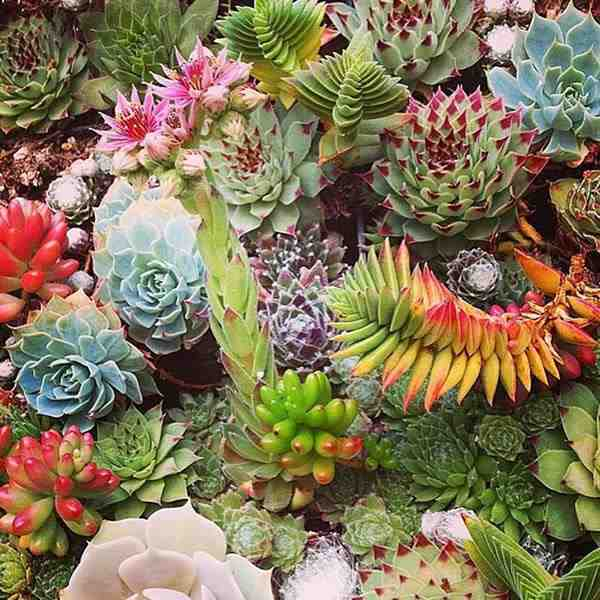 10 especies de cactus y plantas suculentas f ciles de for Especies de plantas ornamentales