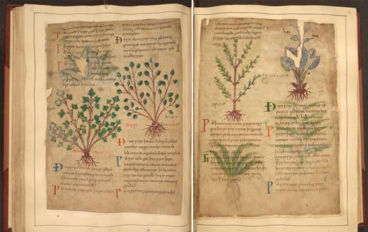 , Libro de hierbas medicinales de 1000 años de antigüedad disponible en línea de forma gratuita