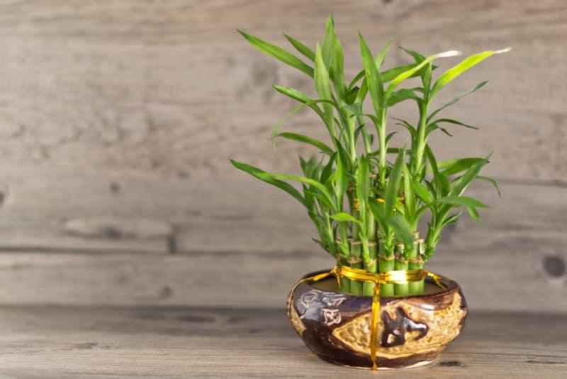 12 plantas que crean energía positiva en tu hogar, 12 plantas que irradian energía positiva en tu hogar