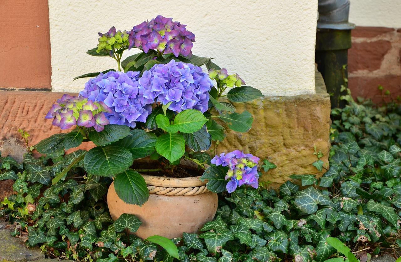 , 6 formas de reanimar una planta que está muriendo