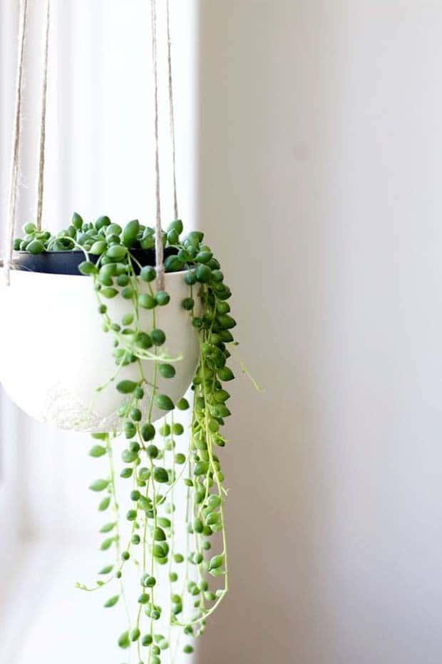 Suculentas: conozca las principales varie y cómo cultivarlos