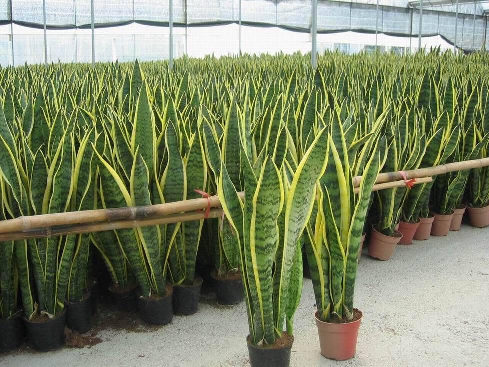 , Tenga al menos una de estas plantas en su casa: son verdaderas «bombas de oxígeno»