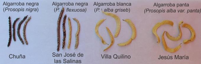 Harina de Algarroba, Recetas, Propiedades y más