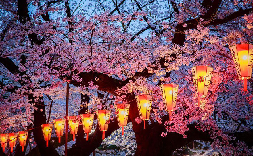 National Geographic muestra increíbles fotografías de cerezos floreciendo en Japón