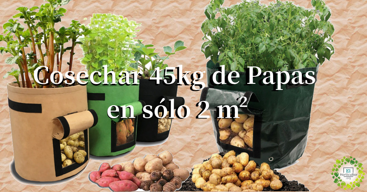, Cómo cosechar 45kg de Papas en sólo 2 metros cuadrados