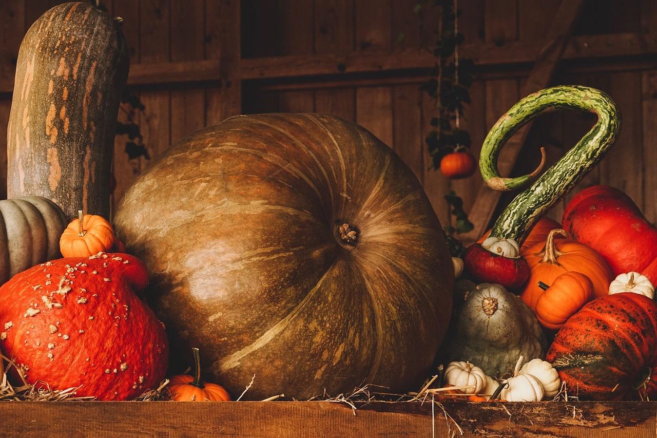 , Producción artesanal de semillas de zapallo