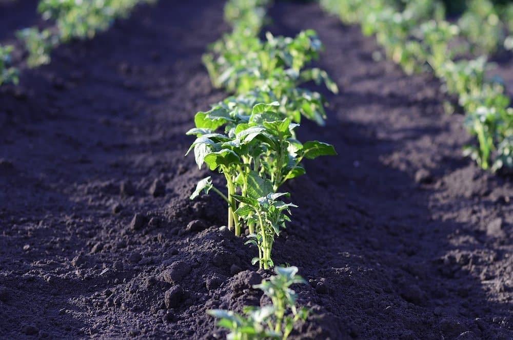 , La solución de la ONU para erradicar el hambre en el mundo: agricultura a pequeña escala