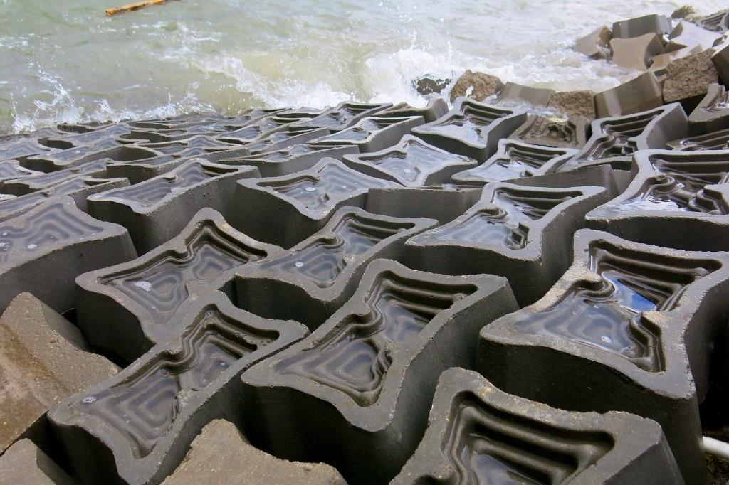 , Bióloga crea concreto que ayuda a proteger la fauna marina