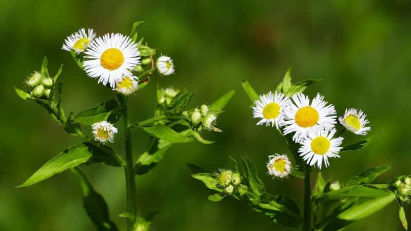 15 plantas comunes que son venenosas para tus mascotas