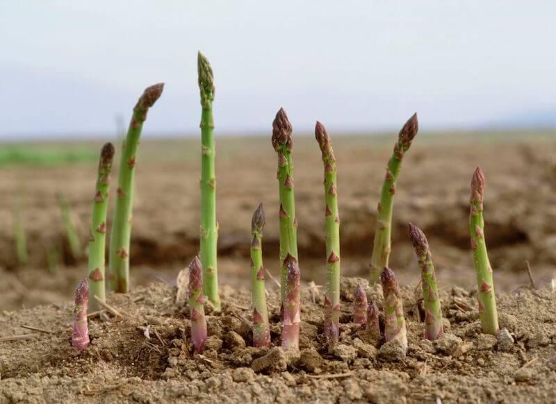 12 fotos que demuestran que la mayoría de la gente NO tiene idea de cómo crece la comida