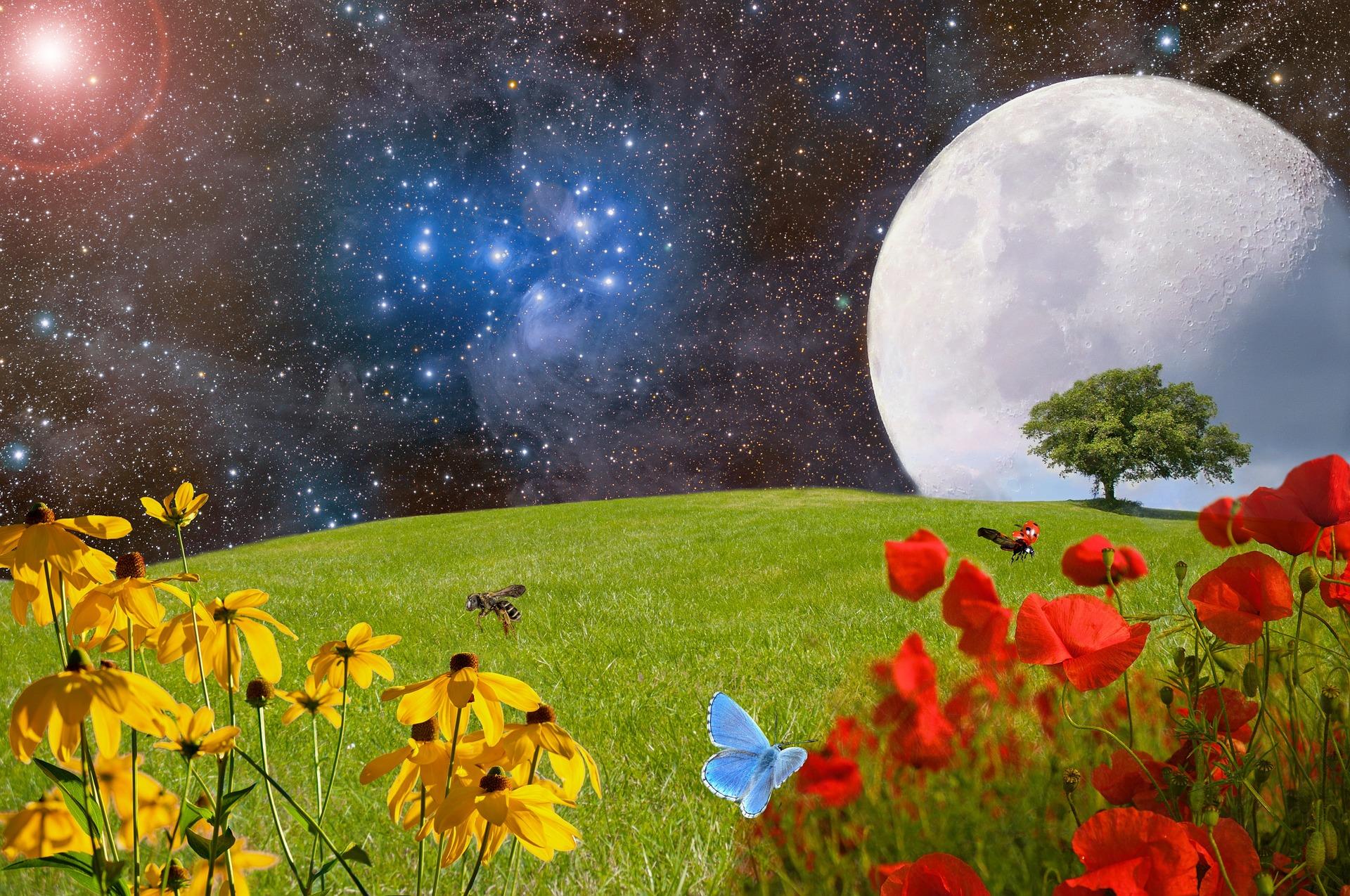 , Plantas que florecen de noche para un mágico jardín lunar