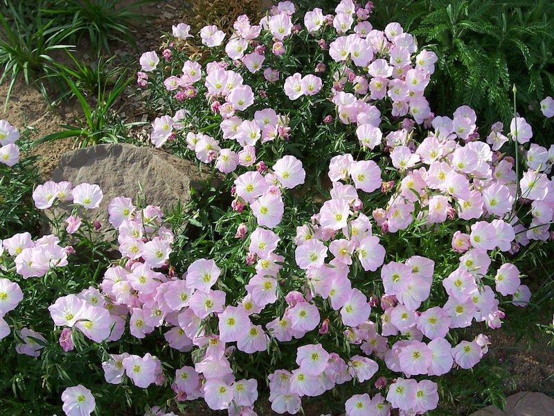Plantas que florecen de noche para un mágico jardín lunar