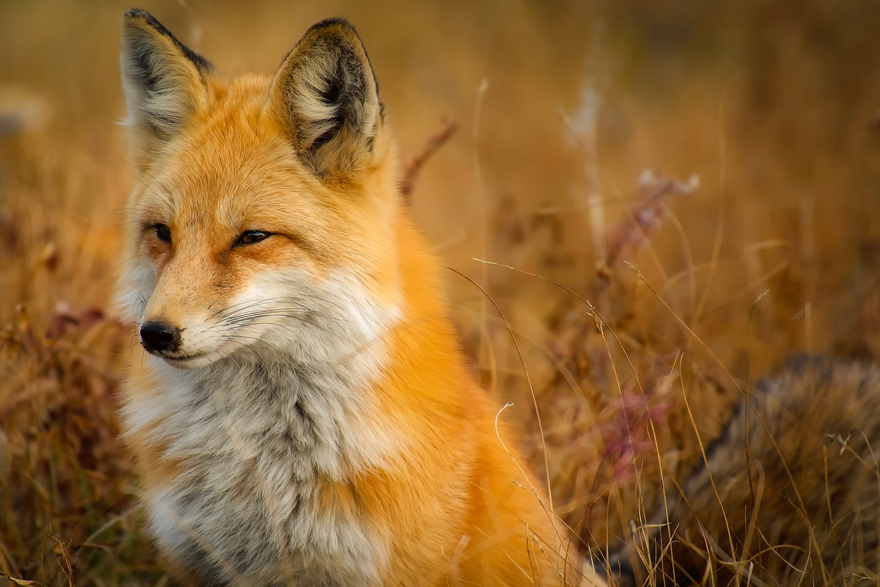, Se prohíbe en California la caza de animales por su piel