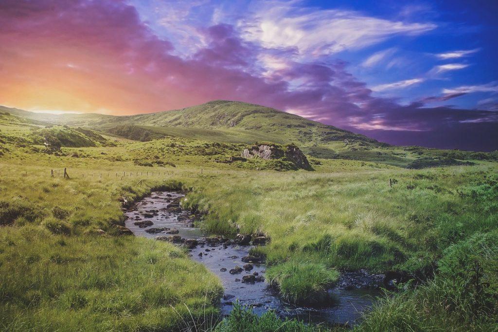 , Irlanda plantará 440 millones de árboles para combatir el cambio climático