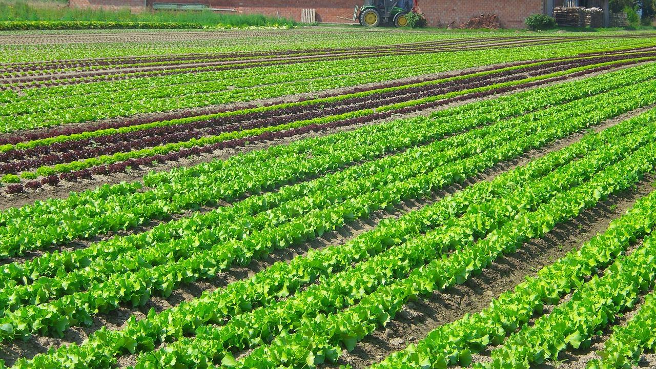, Florianópolis prohíbe el uso de agrotóxicos