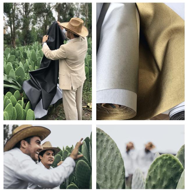 , Para reemplazar el cuero animal, jóvenes mexicanos crean piel de cactus