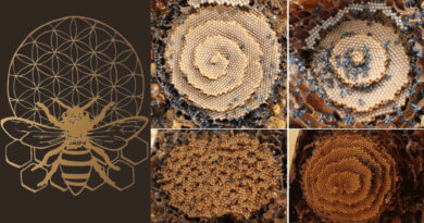 , Abejas aplican la geometría sagrada para construir estas inusuales colmenas