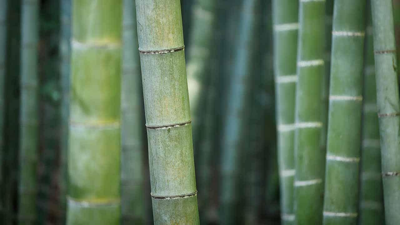 el bambú purifica