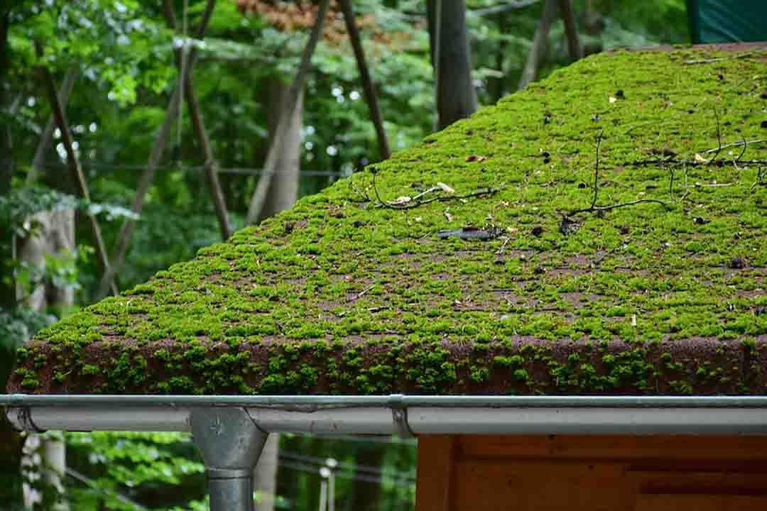 Techo verde con cisterna para recolectar agua
