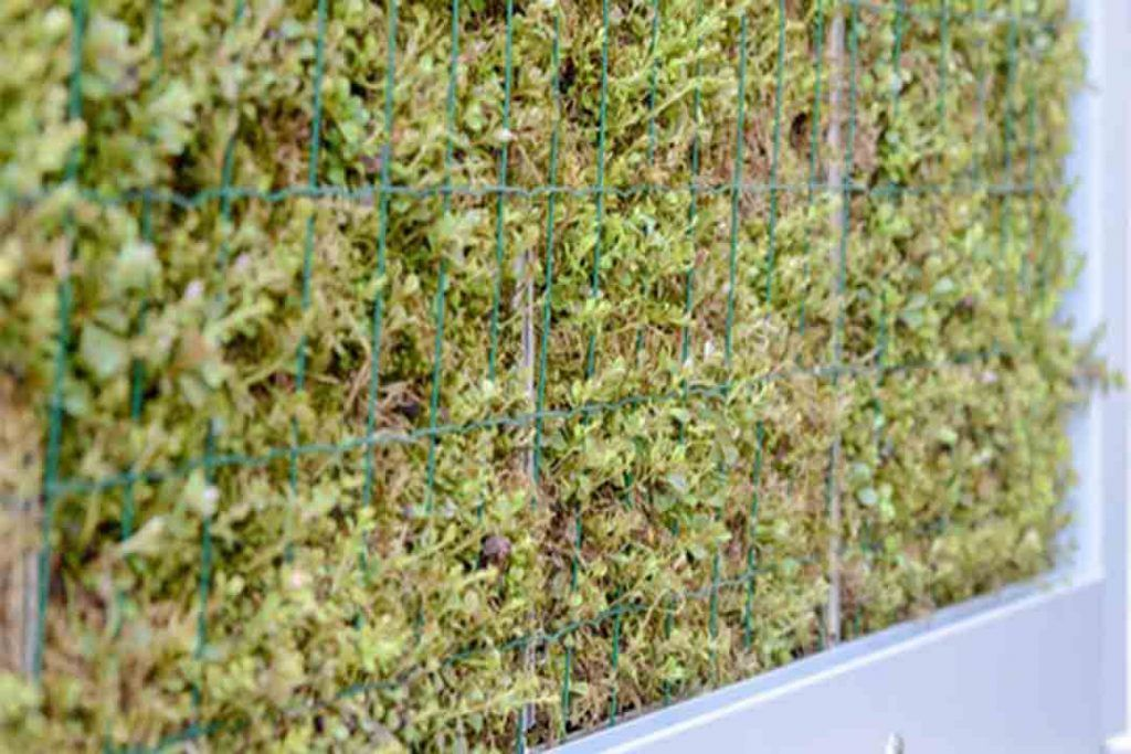 Un panel de musgo que purifica el aire de las grandes ciudade
