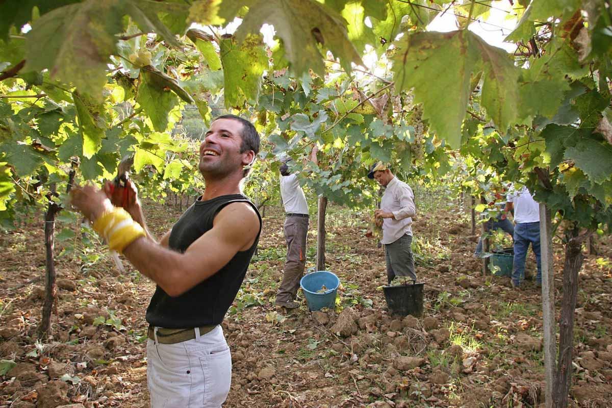 , Sicilia recupera su agricultura ancestral y vence a las multinacionales