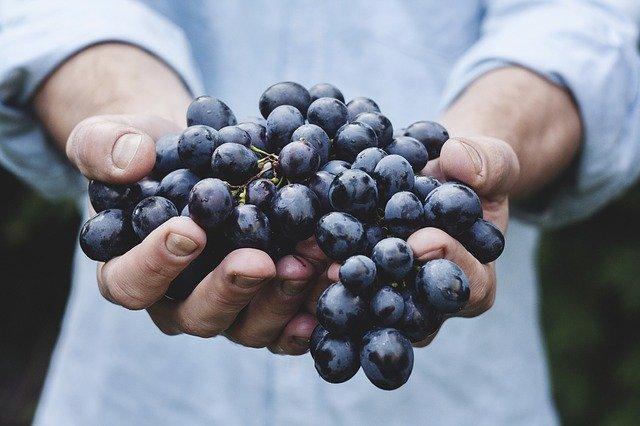 berry harvest photo
