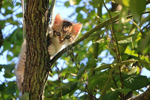, 5 Razones científicamente probadas por las que tener un Gato es bueno para ti