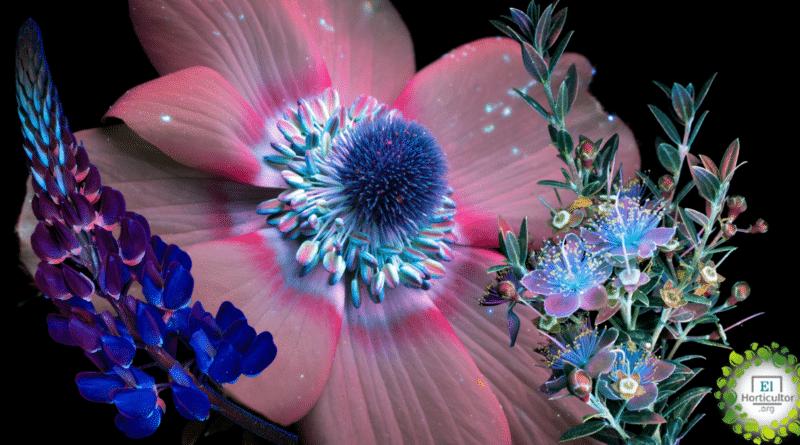 , Así es como las abejas y las mariposas ven las flores. ¡No es de extrañar que las amen!