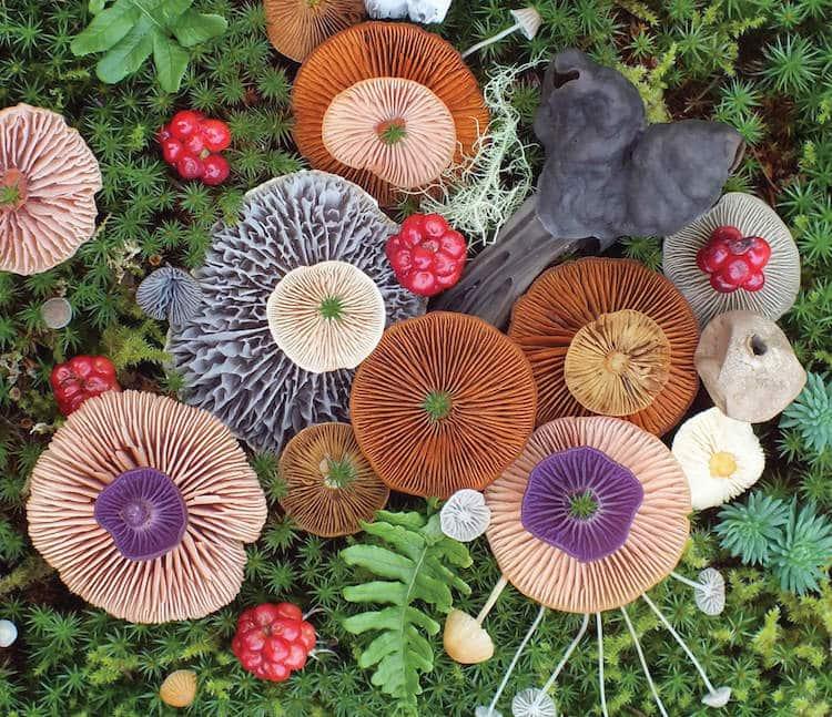 Artista y experta en fotografía de naturaleza Jill Bliss organiza y fotografía coloridos racimos de hongos