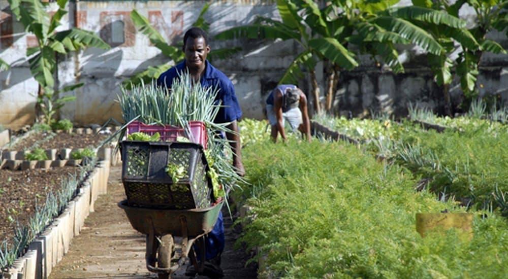 , La agricultura urbana de Cuba muestra la forma de evitar el hambre