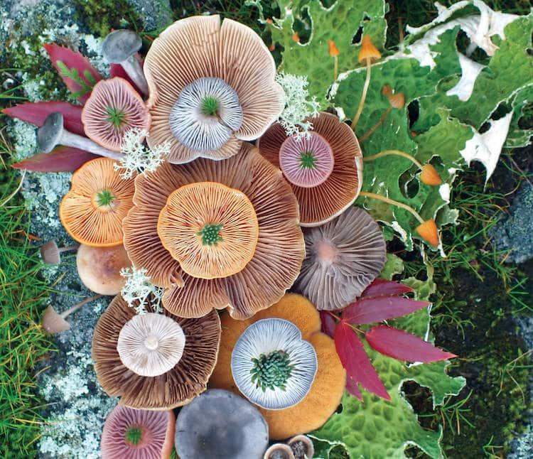 , Jill Bliss captura la presencia mágica de las setas en coloridas fotografías