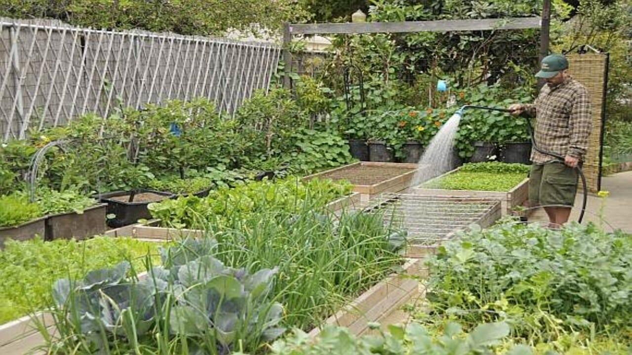 Agricultura en el patio trasero