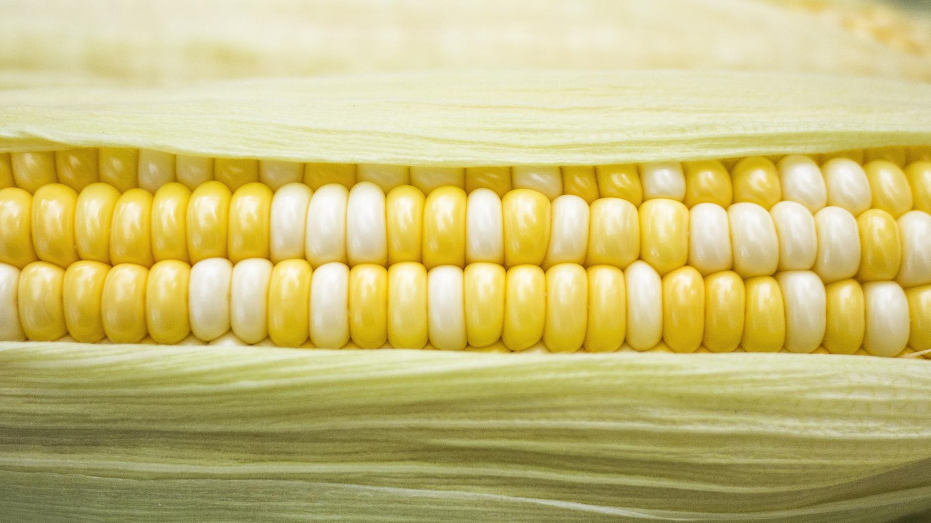 18 Alimentos Ricos en Magnesio