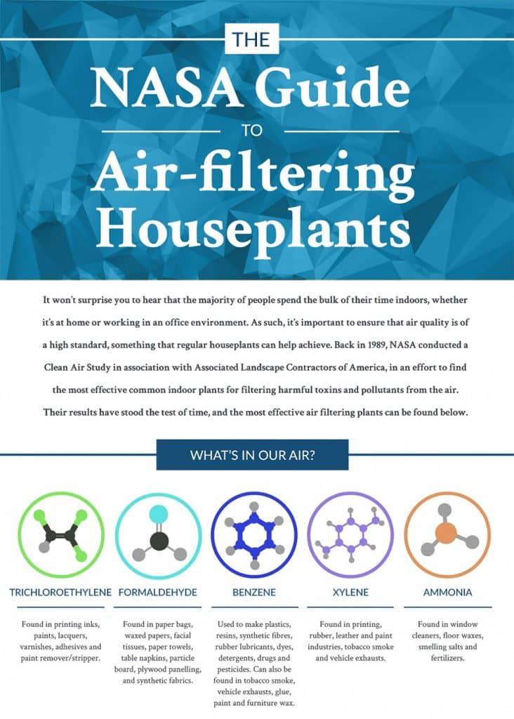 Plantas que limpian el aire