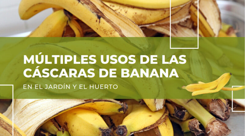 usos de las cáscaras de banana en el jardín y el huerto