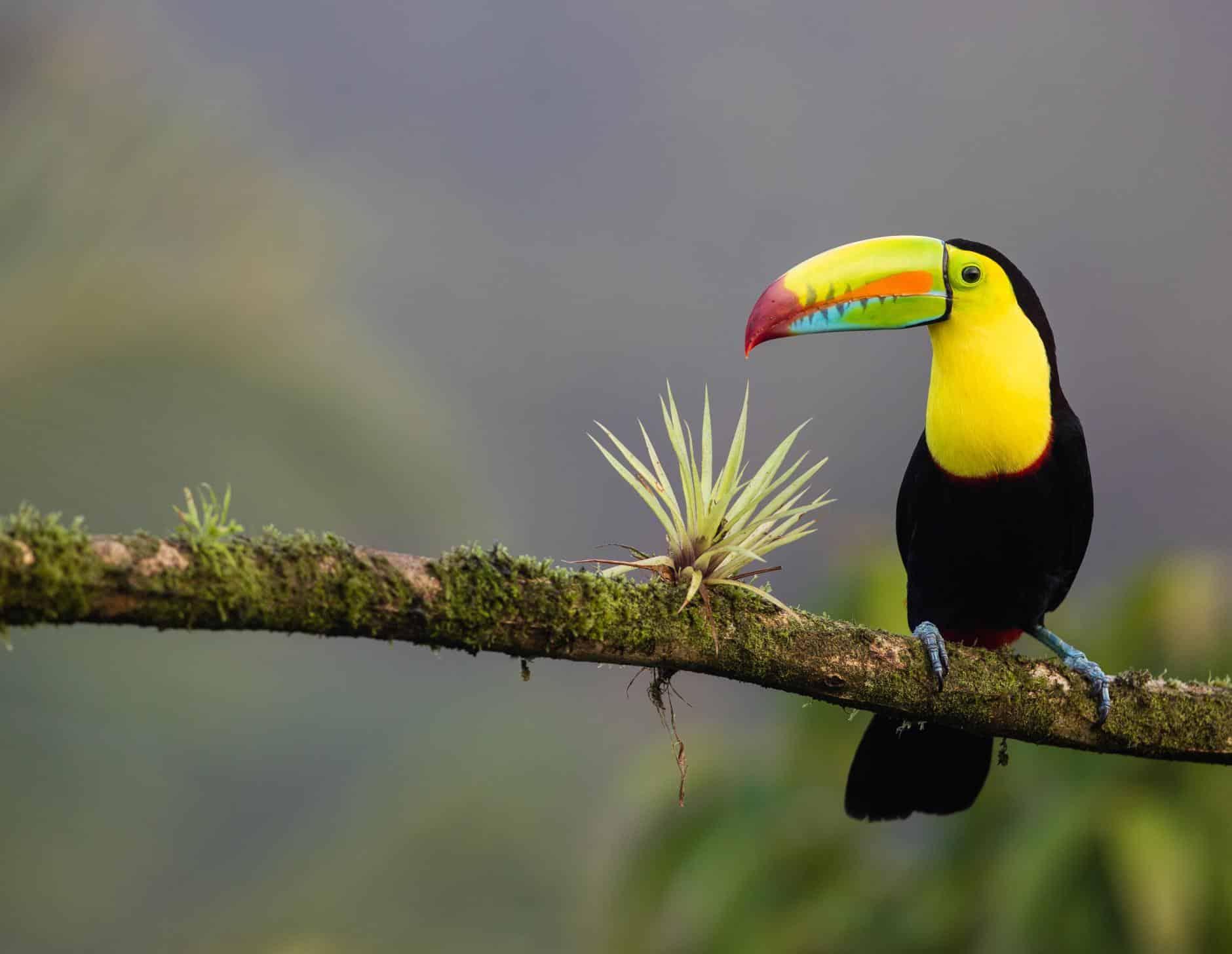Costa Rica anunció que se convertirá en el primer país del mundo en cerrar sus zoológicos y liberar a todos los animales cautivos