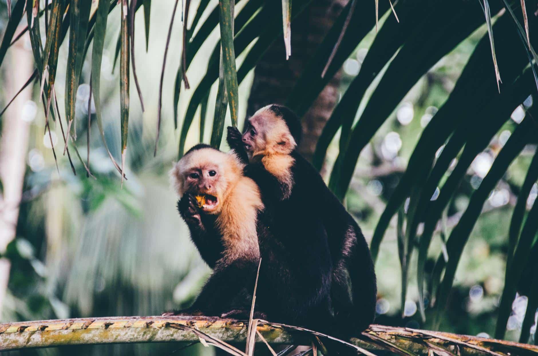 Costa Rica cerrará todos los zoológicos y liberará a cada animal cautivo